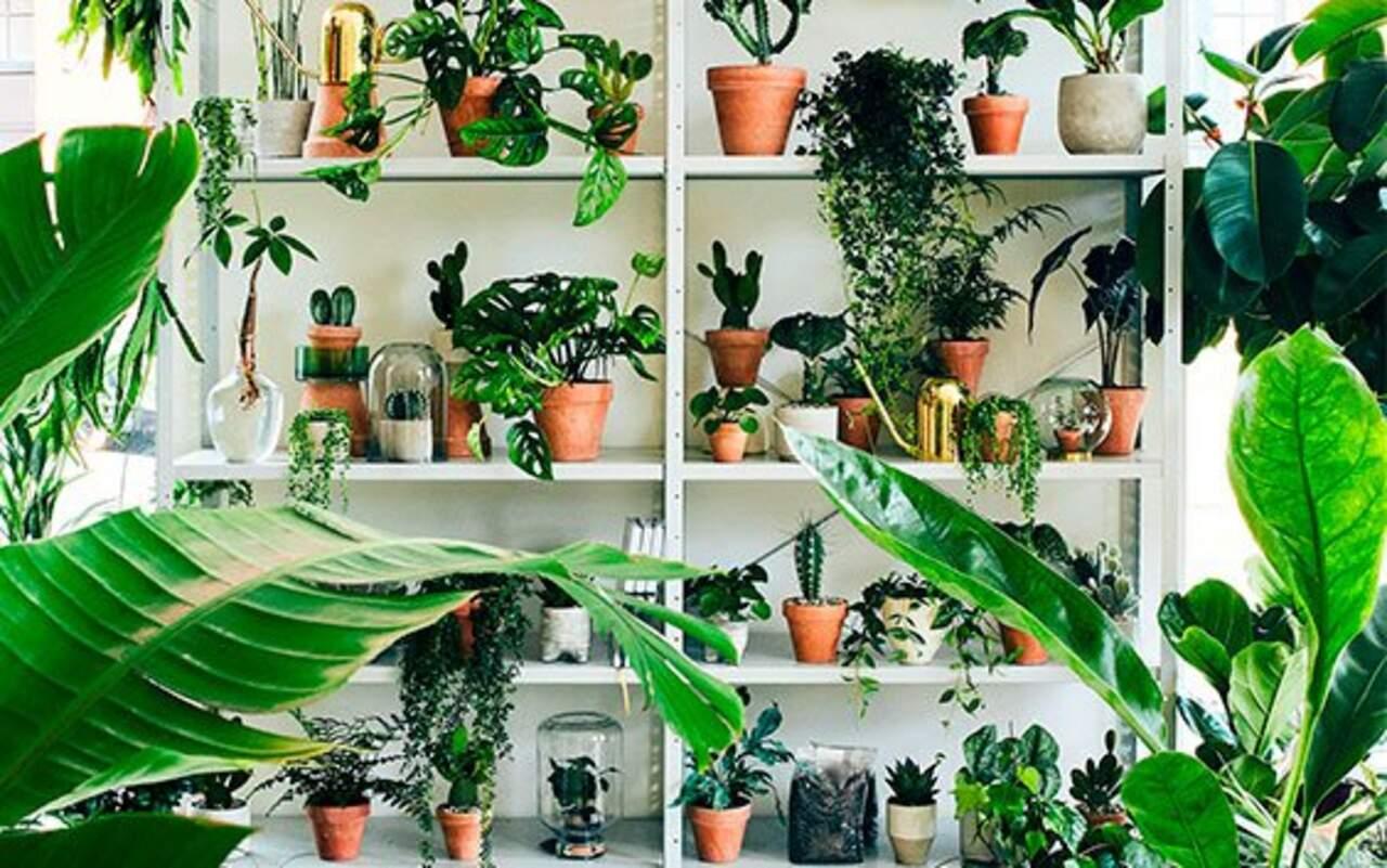 Plant København Gavekort